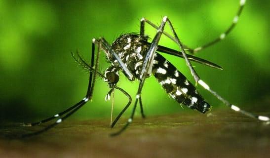 ¡Una app para repeler mosquitos!