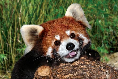 Firefox: renovado y mucho más rápido
