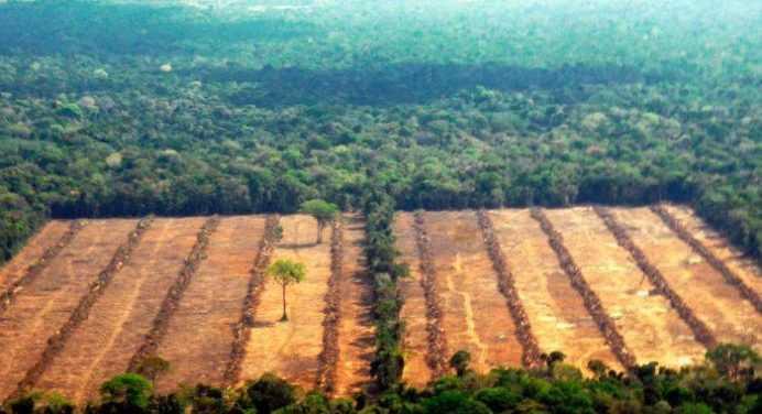 Cómo usar tus búsquedas en la web para luchar contra la deforestación