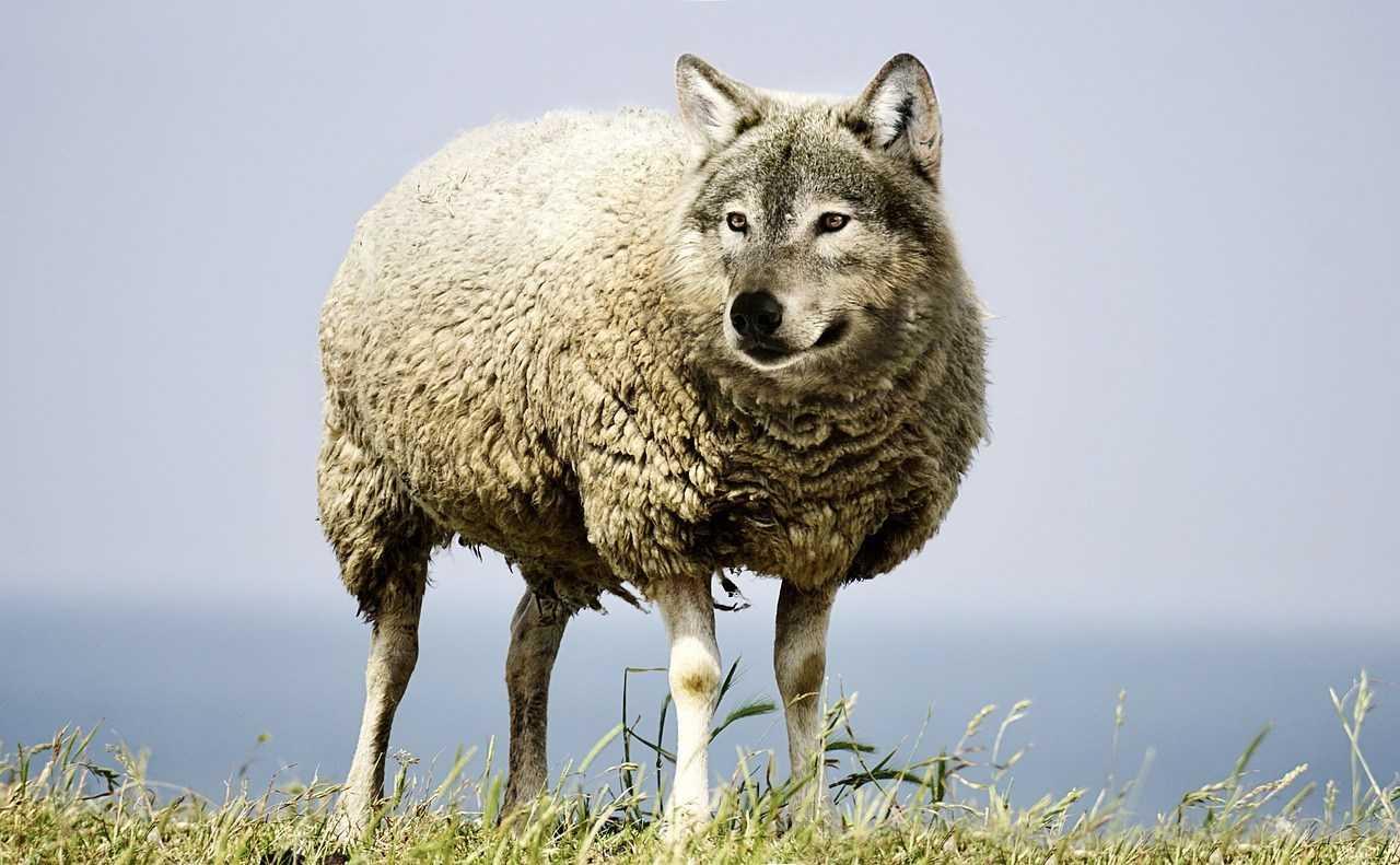 oveja-lobo feminismo pilar aguilar
